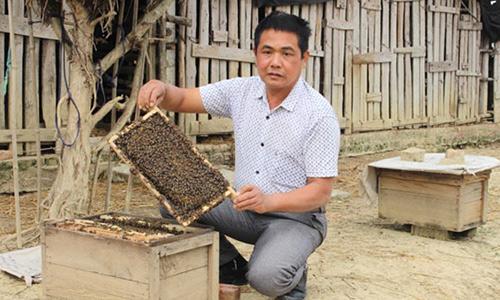 Nuôi ong mật và hươu sao kiếm 600 triệu đồng mỗi năm